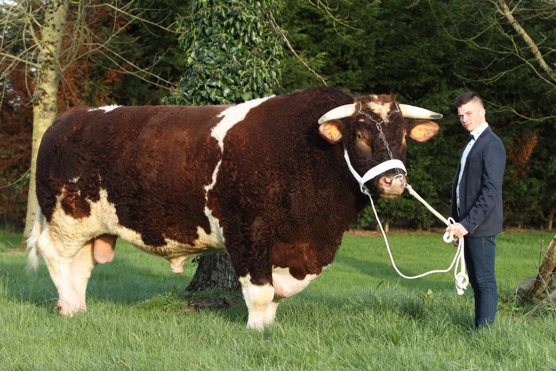Le taureau le plus lourd du monde s 39 appelle f tard meat me - Prix de l entree du salon de l agriculture ...